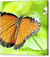Tropical Queen Butterfly Framing Image Canvas Print