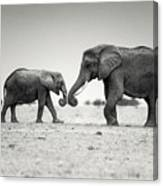 Trunk Pumping Elephants Canvas Print