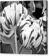 Tulip 11 Canvas Print