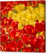 Tulips At Ottawa Tulips Festival Canvas Print