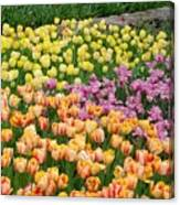 Tulips Galore  Canvas Print