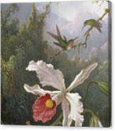 Two Hummingbirds Above A White Orchid Canvas Print