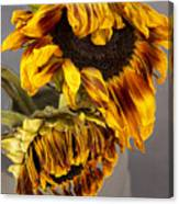 Two Sunflowers Tournesols Canvas Print