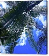 Under The Palms Canvas Print