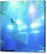 Undersea Deep Background Canvas Print