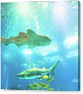 Undersea Shark Background Canvas Print