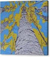 Up At Birch Canvas Print
