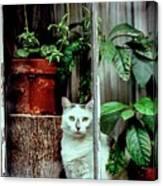 Village Cat Canvas Print