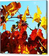 Vineyard 12 Canvas Print