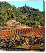 Vineyard 3 Canvas Print