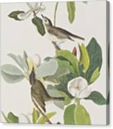 Warbling Flycatcher Canvas Print