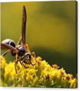 Wasp On Wildflower Canvas Print