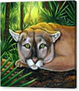 Watching  Florida Panther Canvas Print