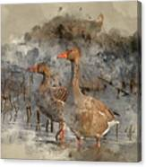 Watercolour Painting Of Beautiful Greylag Goose Anser Anser In W Canvas Print
