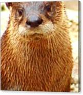 Watered Otter ... Montana Art Photo Canvas Print