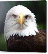 Where Eagles Dare 4 Canvas Print