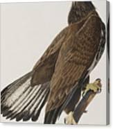 White-headed Eagle Canvas Print