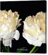 Peonies In Cream Canvas Print