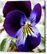 Wild Ground Flowers Canvas Print