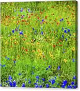 Wildflowers In Bloom Canvas Print