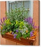 Window Box Blooms Canvas Print