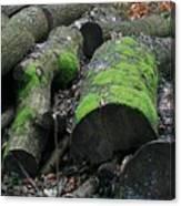 Winter Log Mossy Patterns Canvas Print
