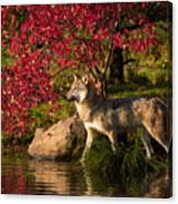 Wolf Portrait In Fall Canvas Print