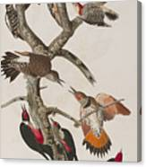 Woodpeckers Canvas Print