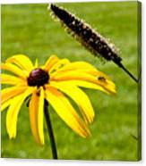 1 Yellow Daisy 2 Yellow Bugs Canvas Print