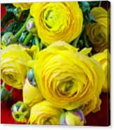 Yellow Ranunculus Canvas Print