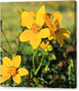 Yellow Wildflowers In A Field Canvas Print