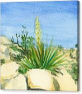 Yucca Tree Canvas Print