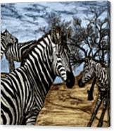 Zebra Outback  Canvas Print