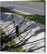 Australia - The Spider Canvas Print