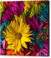 Daisy Petals Abstracts Canvas Print