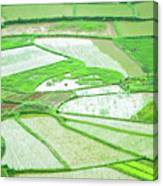 Rice Fields Scenery Canvas Print