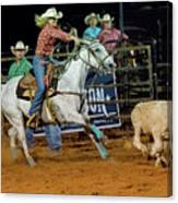 Steer Roping Canvas Print