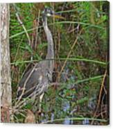 100- Great Blue Heron Canvas Print