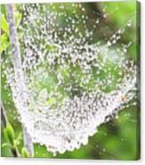 10000-spider Web1 Canvas Print