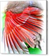 1055-001 - Northern Cardinal Canvas Print