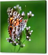 1074- Butterfly Canvas Print