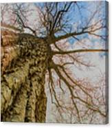 10913 I Am Groot Canvas Print