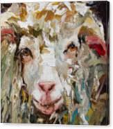 10x10 Sheep Canvas Print