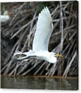 Great Egret Building A Nest Canvas Print