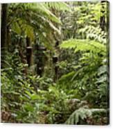 Jungle 30 Canvas Print