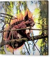 11451 Red Squirrel Sketch Canvas Print