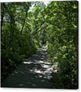 1174, Forest Path Canvas Print