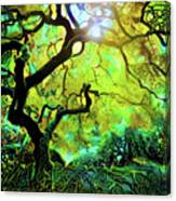12 Abstract Japanese Maple Tree Canvas Print