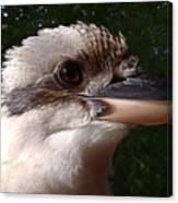 Australia - Kookaburra Poses Canvas Print
