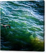 Ca Bird Canvas Print